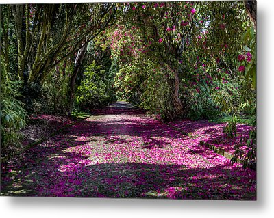 In The Pink  Metal Print by Martina Fagan