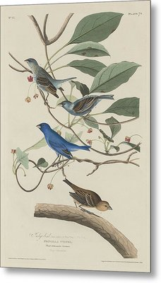 Indigo Bird Metal Print by Rob Dreyer
