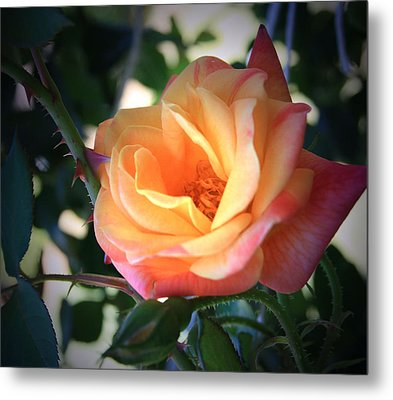 Metal Print featuring the photograph Jacob's Rose by Marna Edwards Flavell