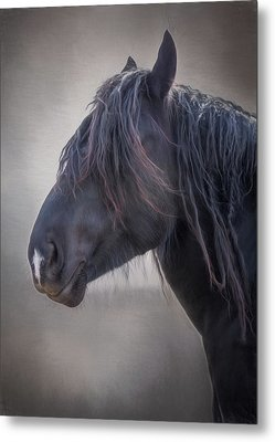 Metal Print featuring the photograph Jay by Debby Herold