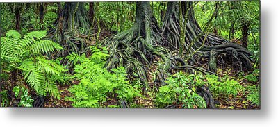 Metal Print featuring the photograph Jungle Roots by Les Cunliffe