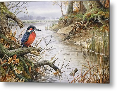 Kingfisher Metal Print by Carl Donner
