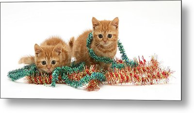 Kittens With Tinsel Metal Print