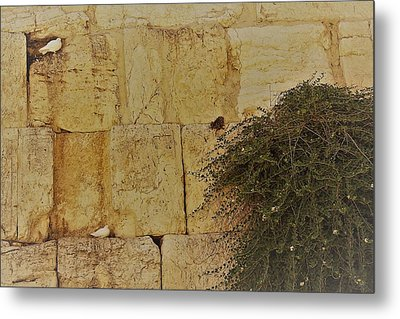 Kotel Sunshine Day Metal Print