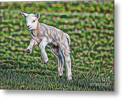 Lamb Collection Metal Print by Marvin Blaine