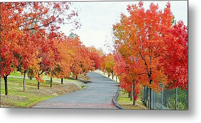 Metal Print featuring the photograph Last Days Of Autumn by AJ Schibig