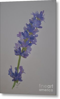 Metal Print featuring the drawing Lavender by Linda Ferreira