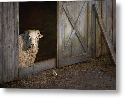 Metal Print featuring the photograph Freckles And Friend by Robin-Lee Vieira