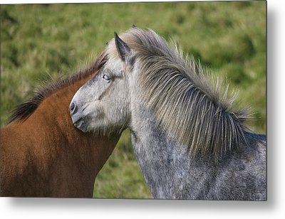 Metal Print featuring the photograph Lean On Me by Elvira Butler