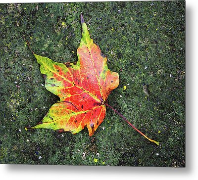 Metal Print featuring the photograph leave alone No.2 by Tom Druin