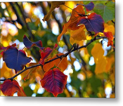 Leaves Of Autumn Metal Print by Stephen Anderson