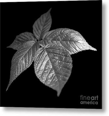 Leaves Metal Print by Tony Cordoza