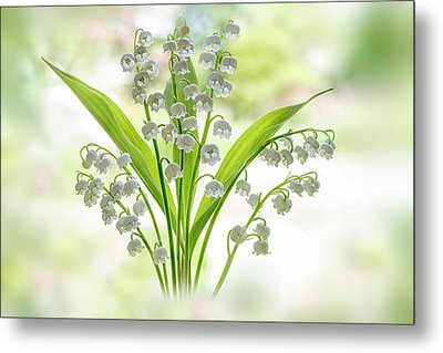 Lily Of The Valley Metal Print by Jacky Parker