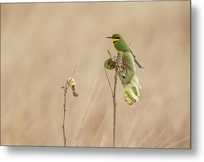 Metal Print featuring the tapestry - textile Little Bee-eater by Kathy Adams Clark