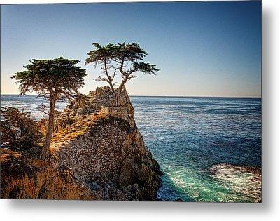 Lone Cypress Tree Metal Print by James Hammond