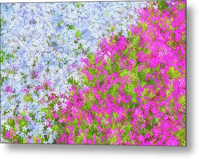 Pink And Purple Phlox Metal Print by Andrea Kappler