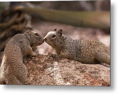 Metal Print featuring the photograph Love Is In The Air  by Saija Lehtonen