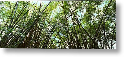 Low Angle View Of Bamboo Trees, Oahu Metal Print by Panoramic Images