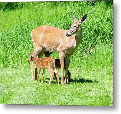 Lunch Time Metal Print by Sandra Updyke