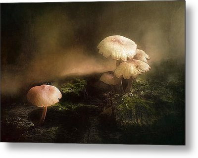 Magic Mushrooms Metal Print by Scott Norris