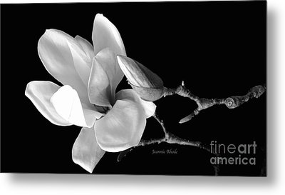 Magnolia In Monochrome Metal Print