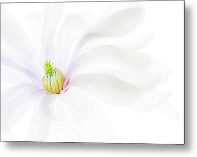 Metal Print featuring the photograph Magnolia by Rebecca Cozart