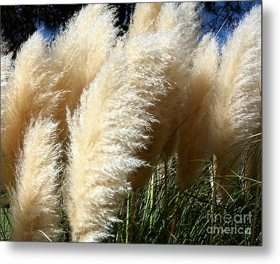 Metal Print featuring the photograph Majestic Pampas Grass by Merton Allen