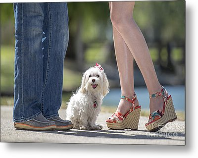Maltese In The Middle Metal Print