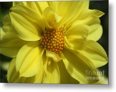 Metal Print featuring the photograph Morning Light by Edward R Wisell