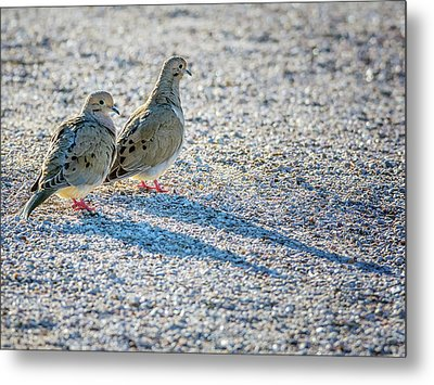 Mourning Doves Metal Print by Tam Ryan