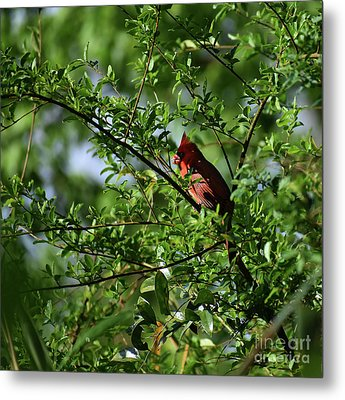 Metal Print featuring the photograph Mr Red by Skip Willits