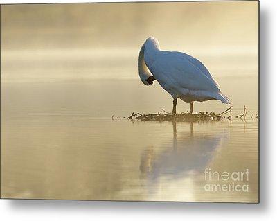 Mute Swan At Sunrise Metal Print