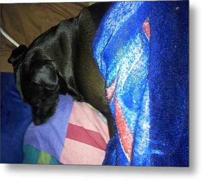 Metal Print featuring the photograph Naptime by Jewel Hengen