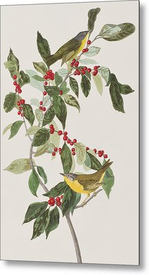Nashville Warbler Metal Print by John James Audubon