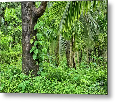Metal Print featuring the photograph Nature 7 by Charuhas Images