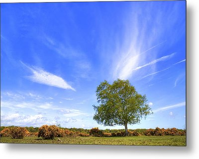 New Forest - Hampshire - Uk Metal Print by Joana Kruse