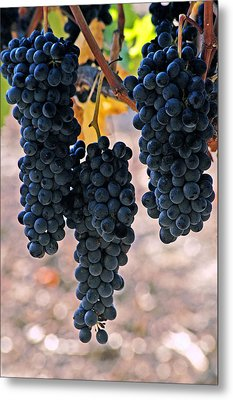 Metal Print featuring the photograph New Grapes by Gary Brandes