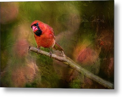 Northern Cardinal Metal Print by Irwin Seidman