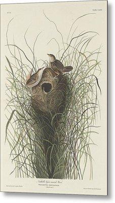 Nuttall's Lesser Marsh Wren Metal Print