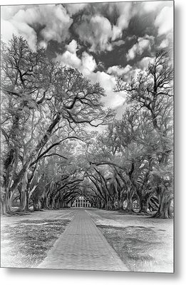 Oak Alley 7  Metal Print by Steve Harrington