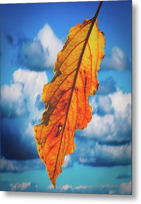 October Leaf B Fine Art Metal Print
