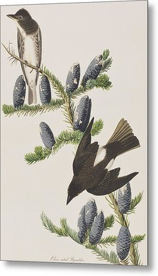 Olive Sided Flycatcher Metal Print by John James Audubon