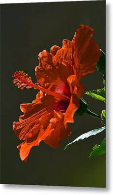 Orange Hibiscus. Metal Print by Andy Za