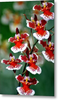 Orchid 34 Metal Print by Marty Koch