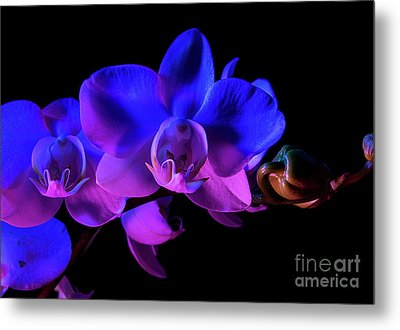 Metal Print featuring the photograph Orchid by Brian Jones