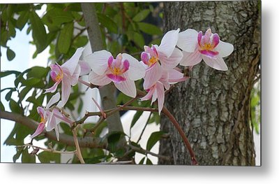 Orchid Bunch Metal Print by Maria Bonnier-Perez
