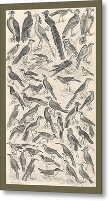 Ornithology Metal Print by Dreyer Wildlife Print Collections