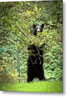 Our Bear Loves Apples Metal Print