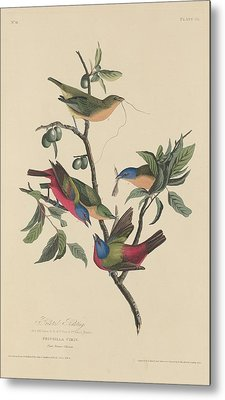 Painted Bunting Metal Print by Anton Oreshkin