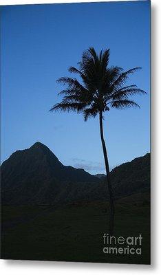 Palm And Blue Sky Metal Print by Dana Edmunds - Printscapes